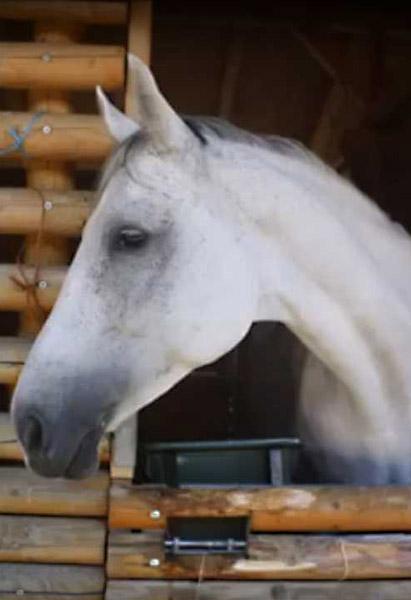 Sold horses 2017 - SportHorses4U com